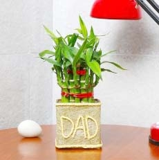 Good Luck Plant (DAD)