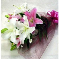 Pink N White Lilies