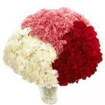 Carnation of Love